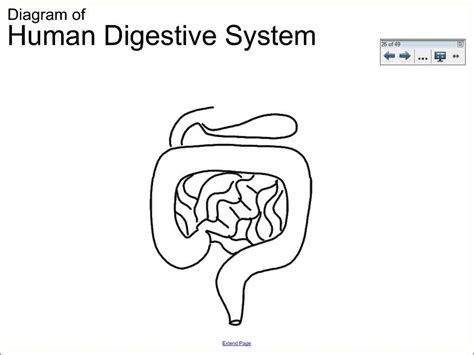 draw diagram easy diagram to draw 6 1 human digestive system