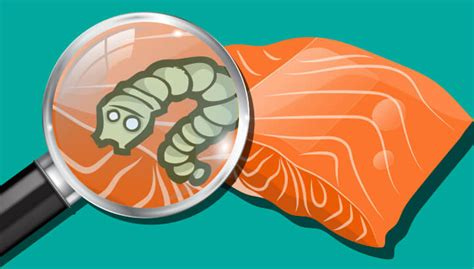 can tapeworms be from to cocaine now tapeworms found in american salmon