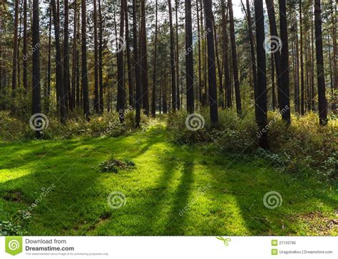 forest glade forest glade royalty free stock photo image 27133785