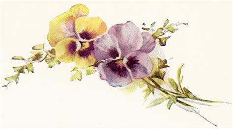 printable purple flowers pansies vintage image old design shop blog