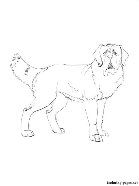 st bernard coloring page coloring pages