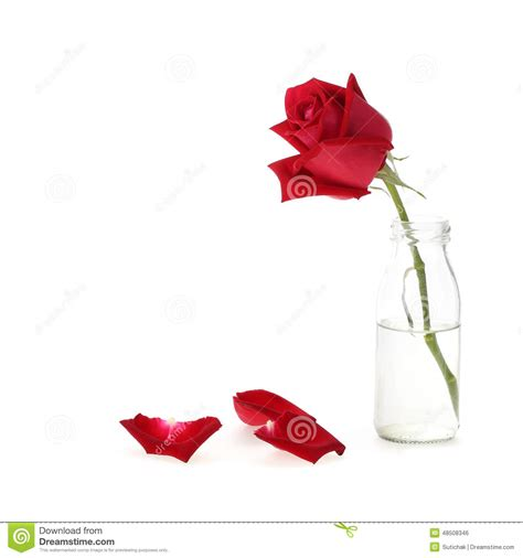 rose in glass red rose flower in glass vase stock photo image 48508346
