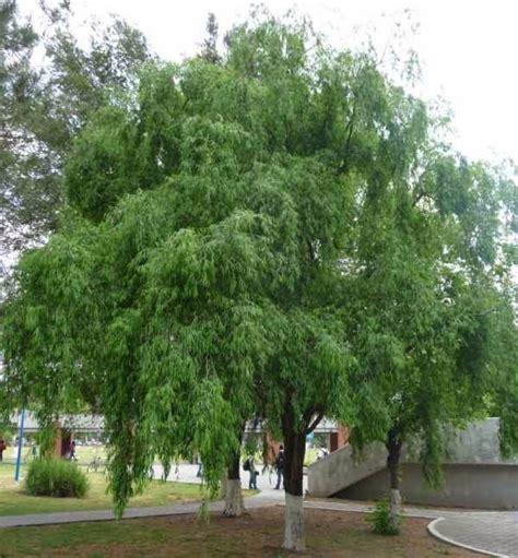 el especiero queretaro molle coste 209 o villagrass