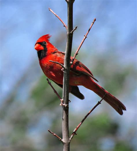 how to keep birds your porch how do you keep birds from nesting on porches