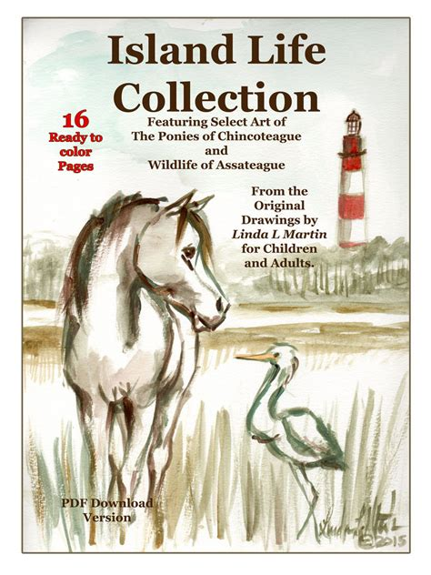 chincoteague pony coloring page chincoteague pony and assateague wild life download and color