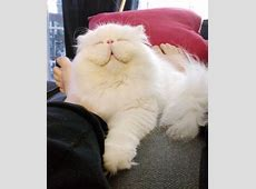 78+ ideas about I'm Awesome on Pinterest | You are awesome ... Fluffiest Kittens In The World