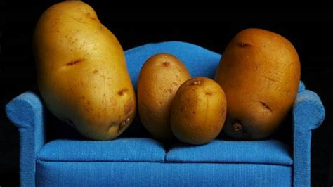 Potato Couching by Etfs For The Potato Investor The Globe And Mail