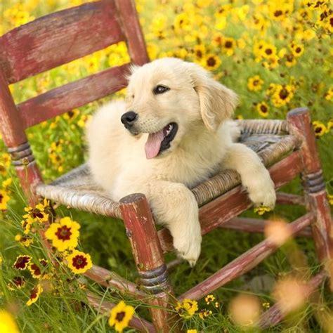 dog wallpapers esther siddiqi download for free 1000 images about cute dog pictures on pinterest puppys
