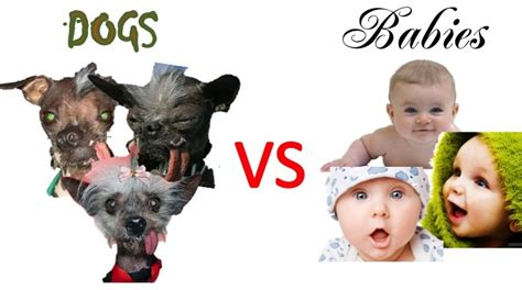 puppies vs babies lurnin with dave dogs vs babies