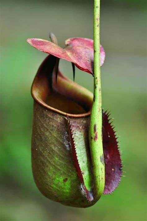 unusual houseplants 453 best rare unusual flowers images on pinterest