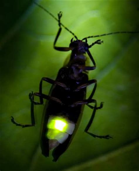 risposte a lettere di richiamo pixwords l immagine con insetto animale selvatico