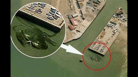 imagenes sorprendentes captadas los 10 monstruos marinos mas famosos youtube