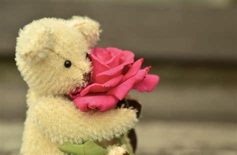 kostenloses foto teddy teddyb 228 r rose liebe