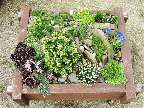 fiori da aiuola piante perenni piante da giardino piante perenni arbusti