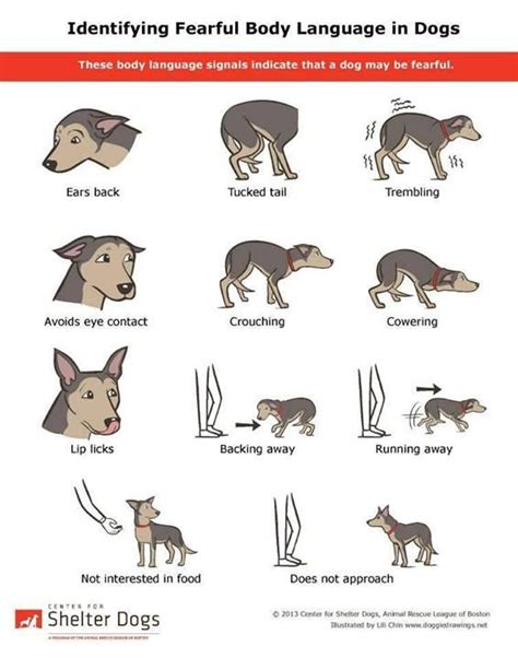 puppy language read a dogs language critters and animals