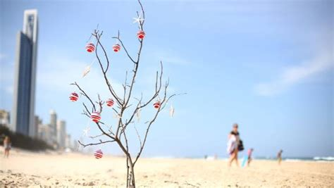 christmas treed with a difference tree growers battle against popularity of plastic stuff co nz