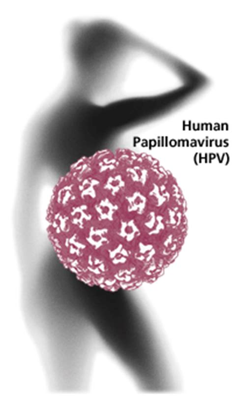 papilloma virus pap test hpv testing and vaccination greensboro gynecology associates