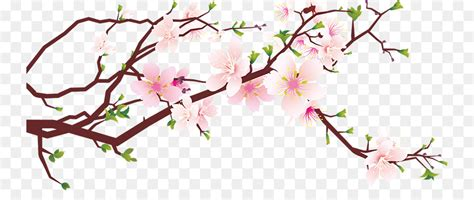 cherry blossom clip cherry blossom clip blossom png 800