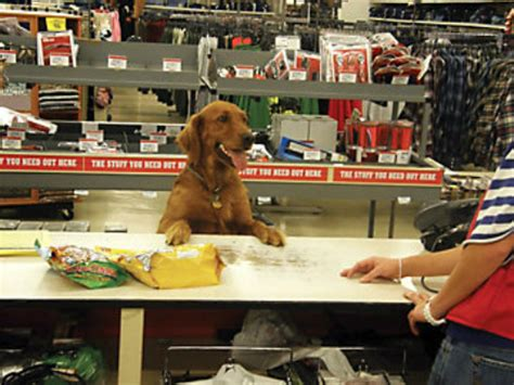 dog friendly stores    bring