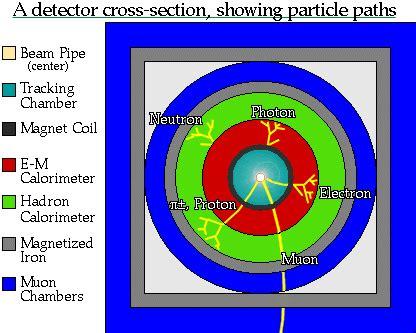 cross section of an atom doorsnede van een detector