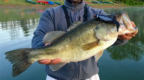 Fisch Bass by Big Bass Fishing At Seneca Lake Topwater Drop
