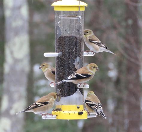 wild birds unlimited finch feeder birdcage design ideas