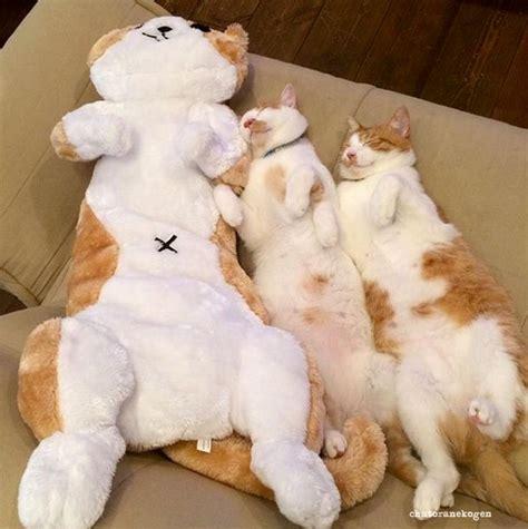 happy pugs burlington nj 1000 ideas about cat boarding on boarding kennels pet sitting and
