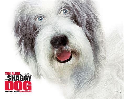 shaggy dogs the shaggy