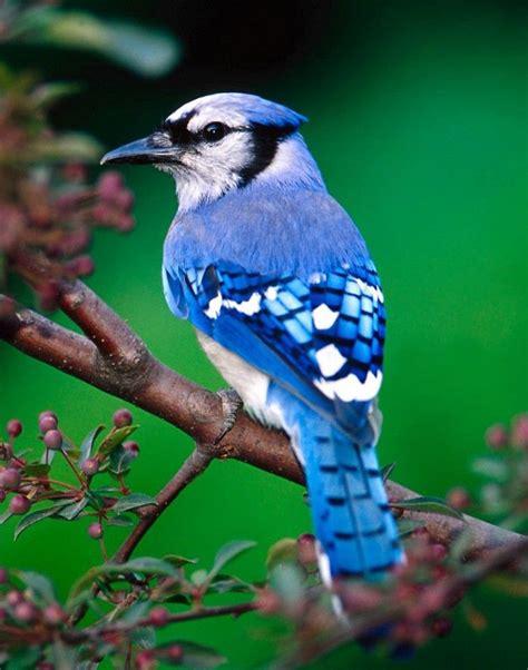 Blue Animals blue animals search beautiful animals