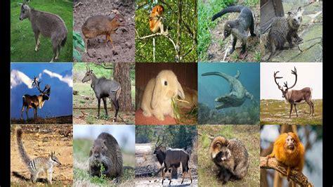 list  animals starting    animals youtube