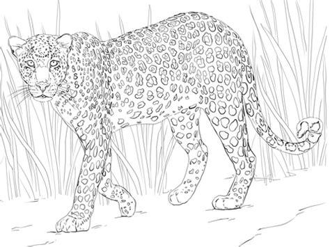 african cats coloring pages coloriage l 233 opard d afrique coloriages 224 imprimer gratuits