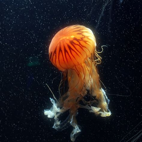 fotos animales marinos georgia travel shabby chic boho