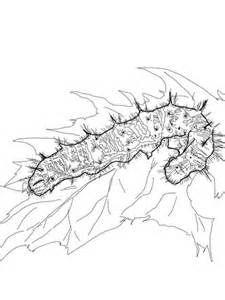 painted lady caterpillar coloring page  printable