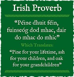 wedding wishes as gaeilge quotes sayings proverbs quotesgram