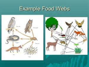 Ford Chaign Food Chains And Food Webs