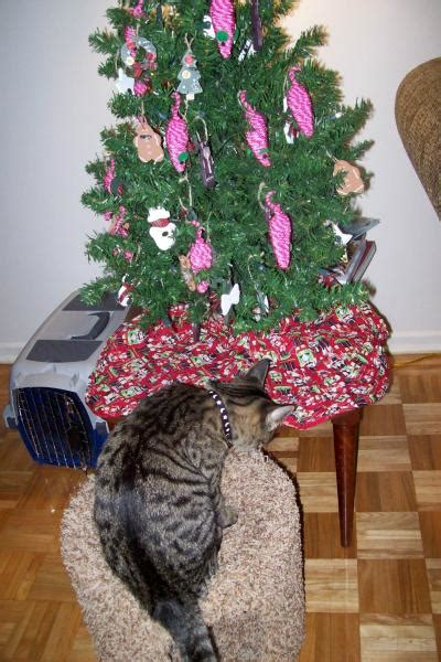 funny wayscto keep cats off christmas tree keeping cats out of the tree thriftyfun