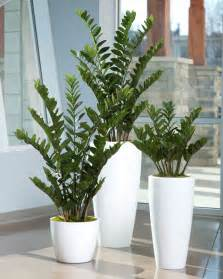 large low light indoor plants zeezee plant low light house plants pinterest