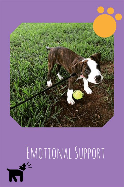 how to register as emotional support animal emotional support animal