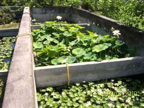 vasi per ninfee ninfee e fiori di loto trevisan