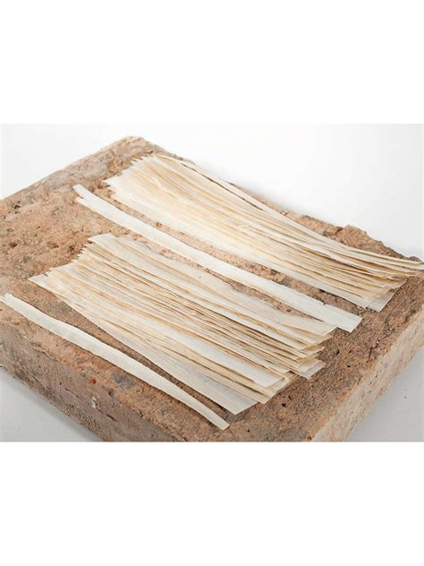 Papyrus Selbst Herstellen by Papyrus Manufacturing Strips For 5 Papyri