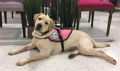diabetic service diabetic alert dogs by sdwr autism service service autos post