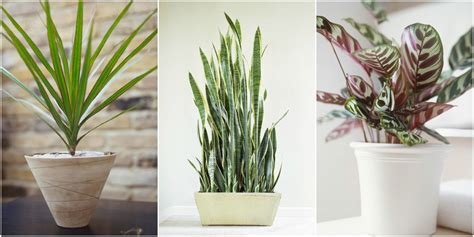Houseplants by Low Light Houseplants Plants That Don T Require Much Light