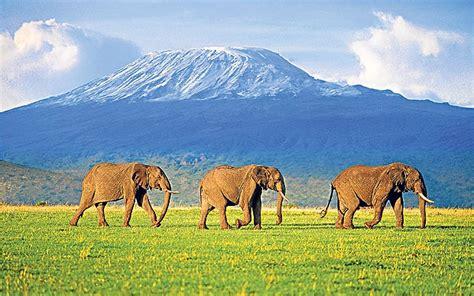 Boneka Grassland By Elie Gallery amboseli kenya where elephants the right of way