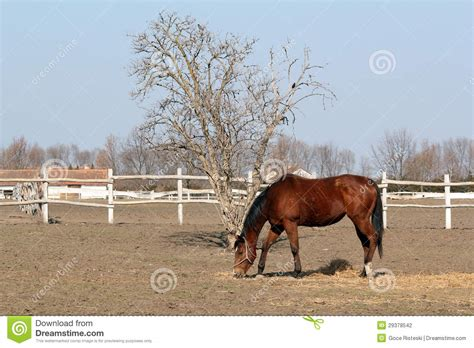 horse corral stock photos horse corral stock images alamy brown horse in corral stock photography image 29378542