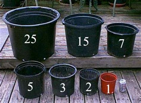 Planter Sizes by The Citrus Stepping Up