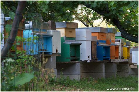 cassetta per apicoltori il mondo dell apis mellifera alveare apiario miele