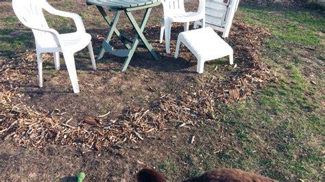 wood chip backyard wood chip backyard 92 backyard wood chip cedar chips