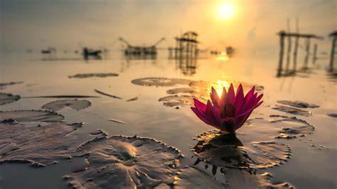0001200968 winter morning in istanbul op lotus on thailand pond in kumphawapi wallpaper for desktop