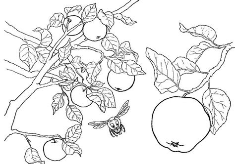 coloring page tree branch apples on the tree branch coloring page tree pinterest
