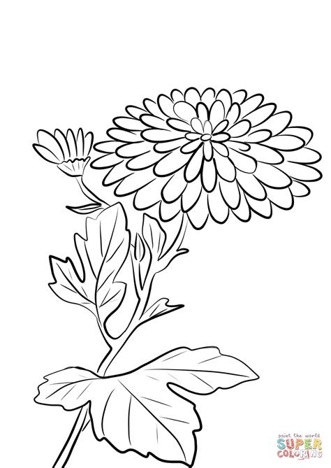 mums colouring book of chrysanthemum morifolium coloring page free printable coloring pages